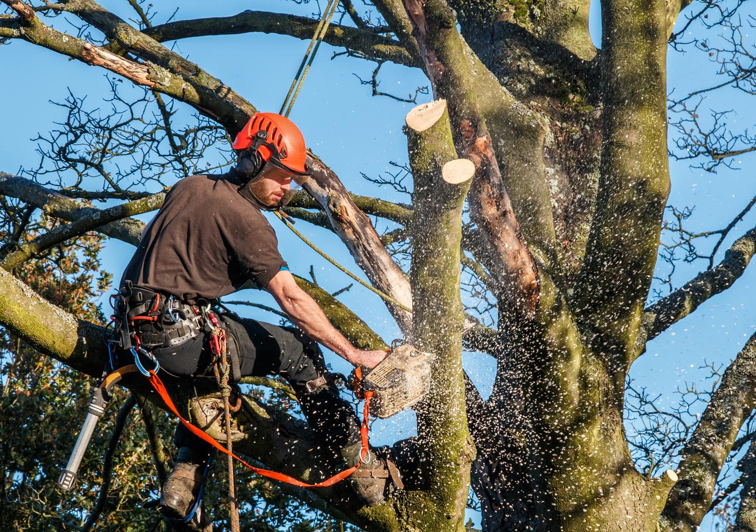 tree service removal